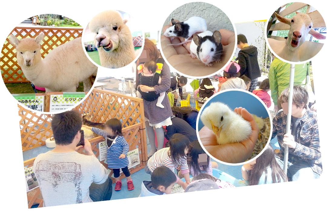ふれあい移動動物園のイベント